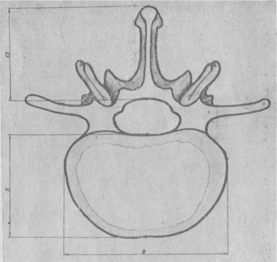 Строение позвоночника человека, анатомия позвоночника